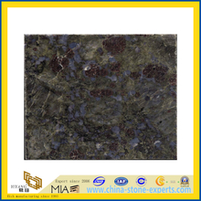 Polished Butterfly Blue Granite Tiles/Slabs (YQZ-GT)